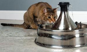 12 гаджетов для кошек с Aliexpress
